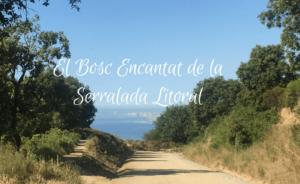 El bosc encantat de la Serralada Litoral